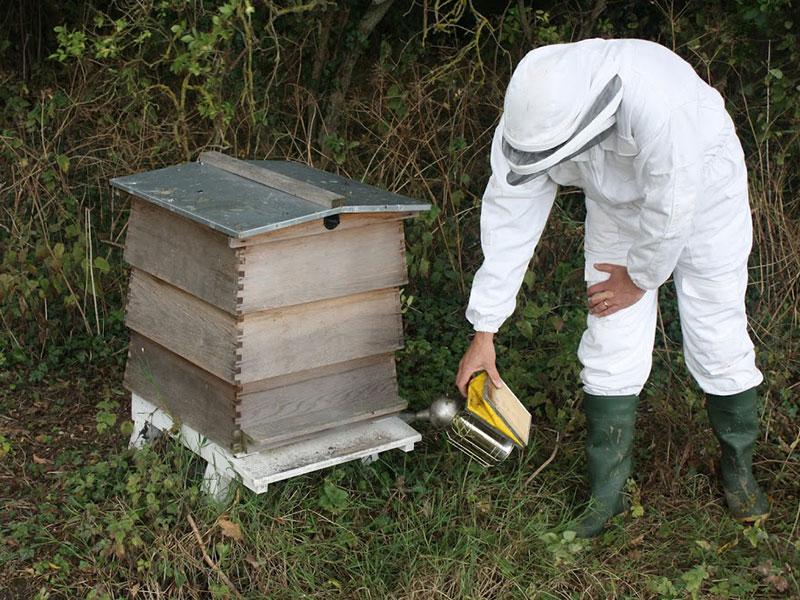 beekeeping-02