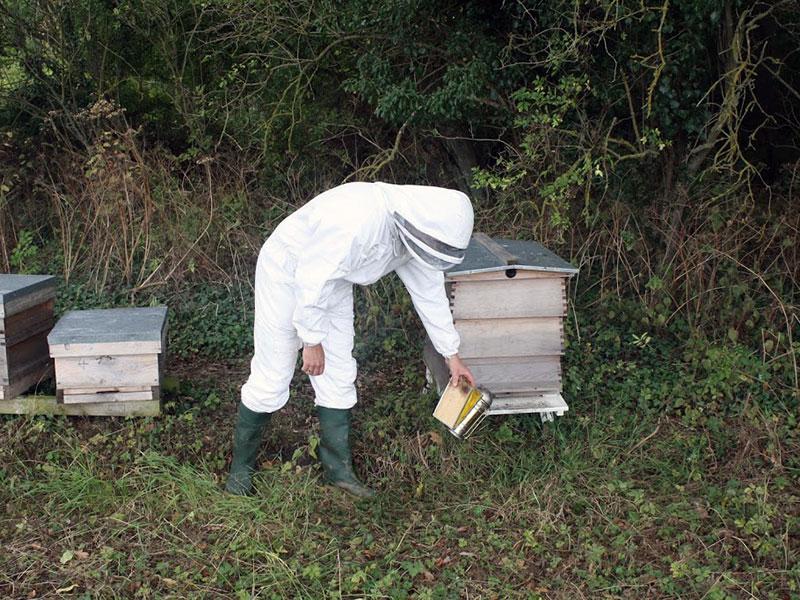 beekeeping-03