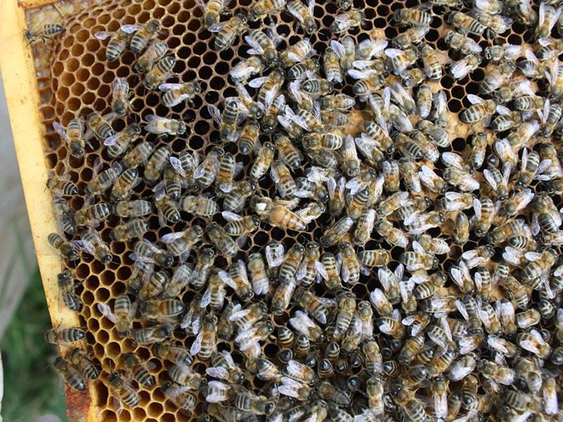 beekeeping-06