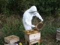 beekeeping-04