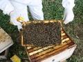 beekeeping-07