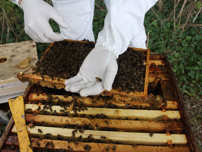beekeeping-05