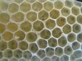 beekeeping-01